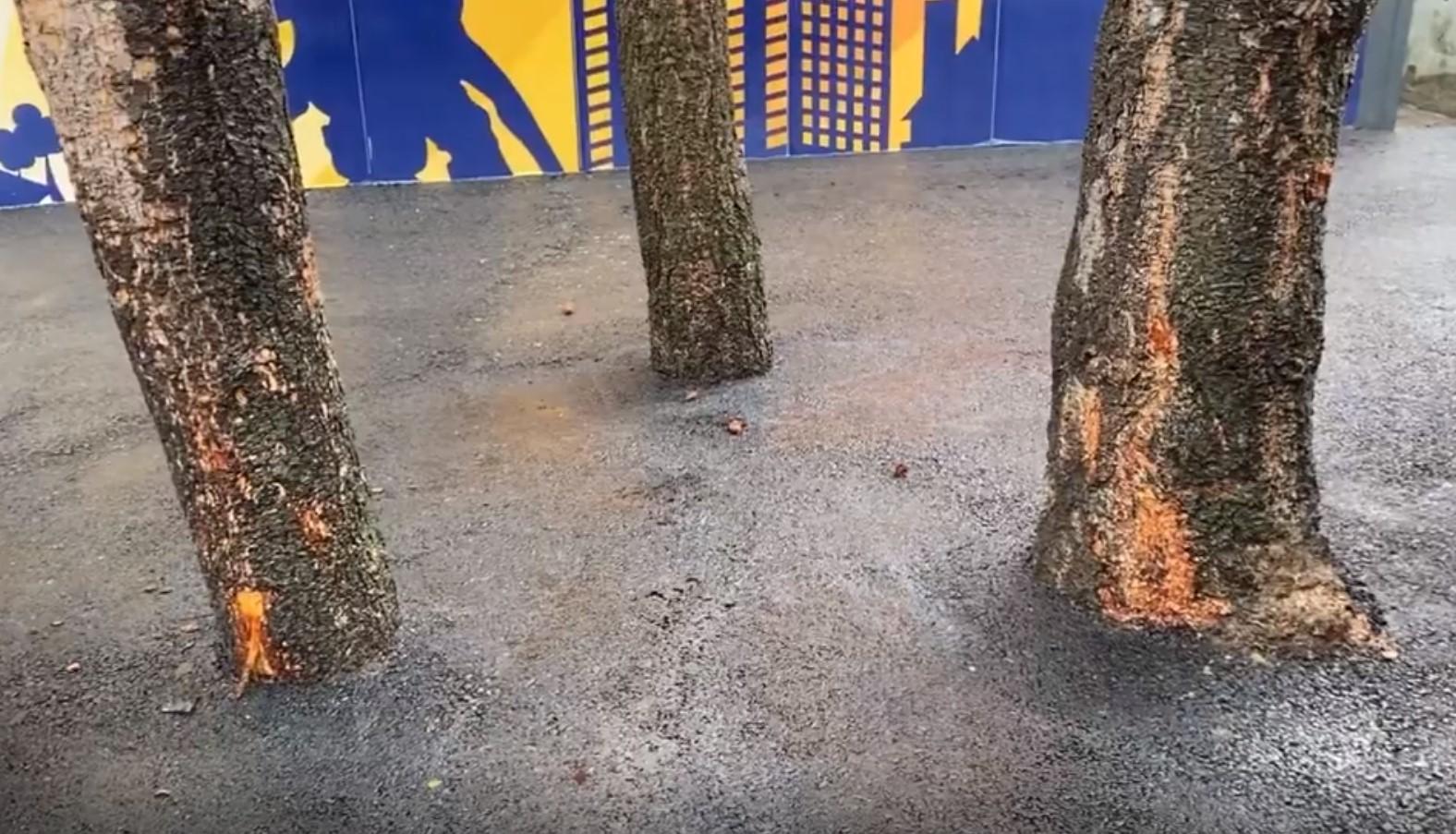 Asfaltirana stabla