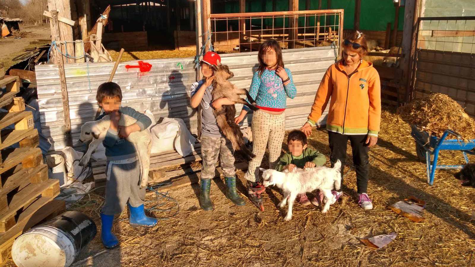 Mališani koji čuvaju ovce i njihova majka