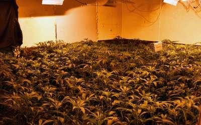 Marihuana laboratorija