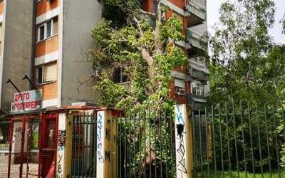 Drvo Ekonomska škola
