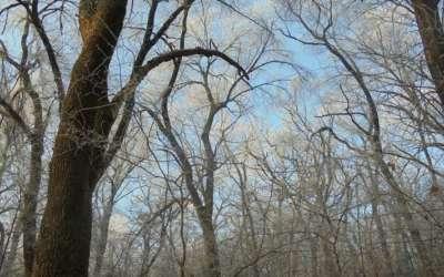 Hrastova šuma kod Dolova