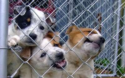 Štenci psi